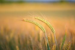 As sementes lançadas pelo semeador caem em solos diferentes. Com qual tipo de solo nossa alma recebe a Palavra de Deus?